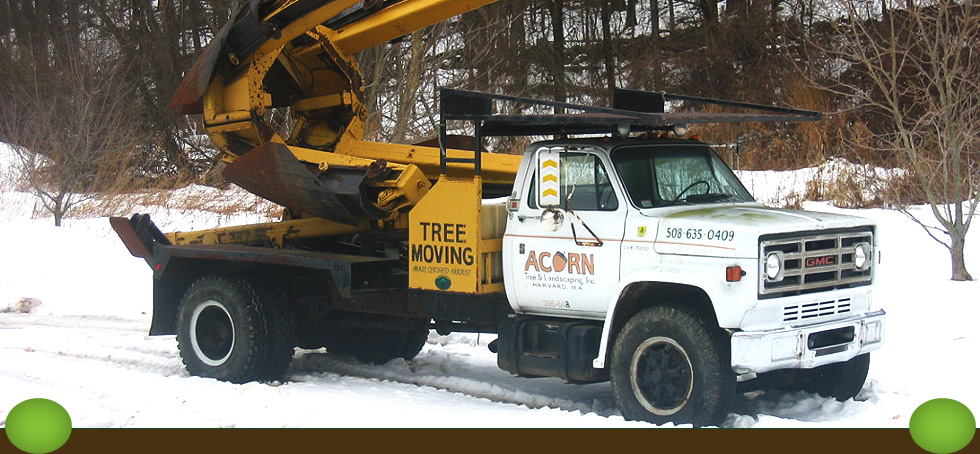 Acorn Tree & Landscaping, Inc.
